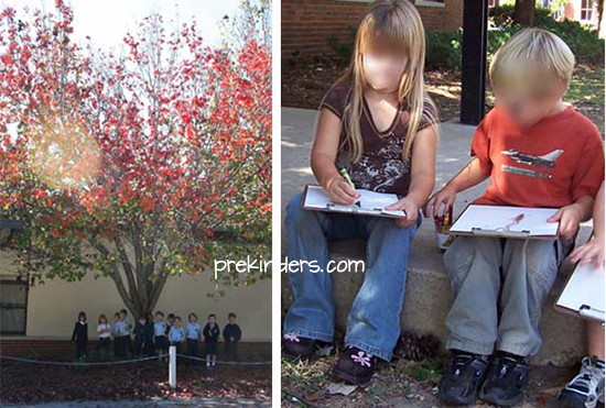 Tree Observation Drawing