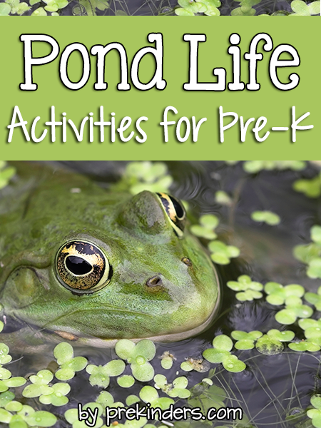 Pond Life Activities for Pre-K Preschool