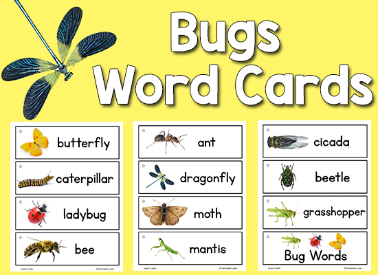 Insect Picture Word Cards - PreKinders